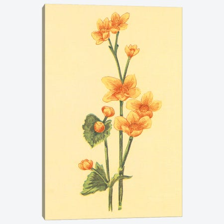 Caltha Palustris Canvas Print #PIC14} by PI Collection Canvas Art