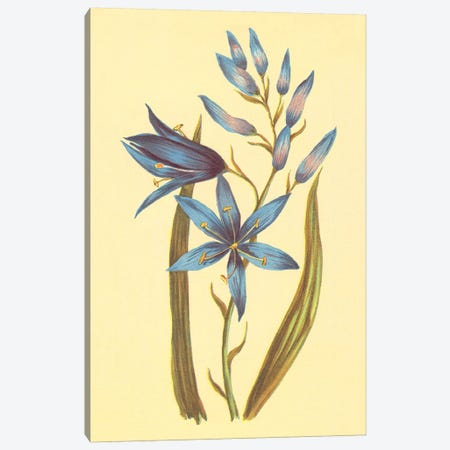 Camass And Wild Hyacinth Canvas Print #PIC15} by PI Collection Canvas Wall Art