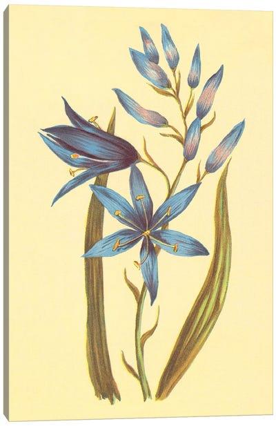 Camass And Wild Hyacinth Canvas Art Print