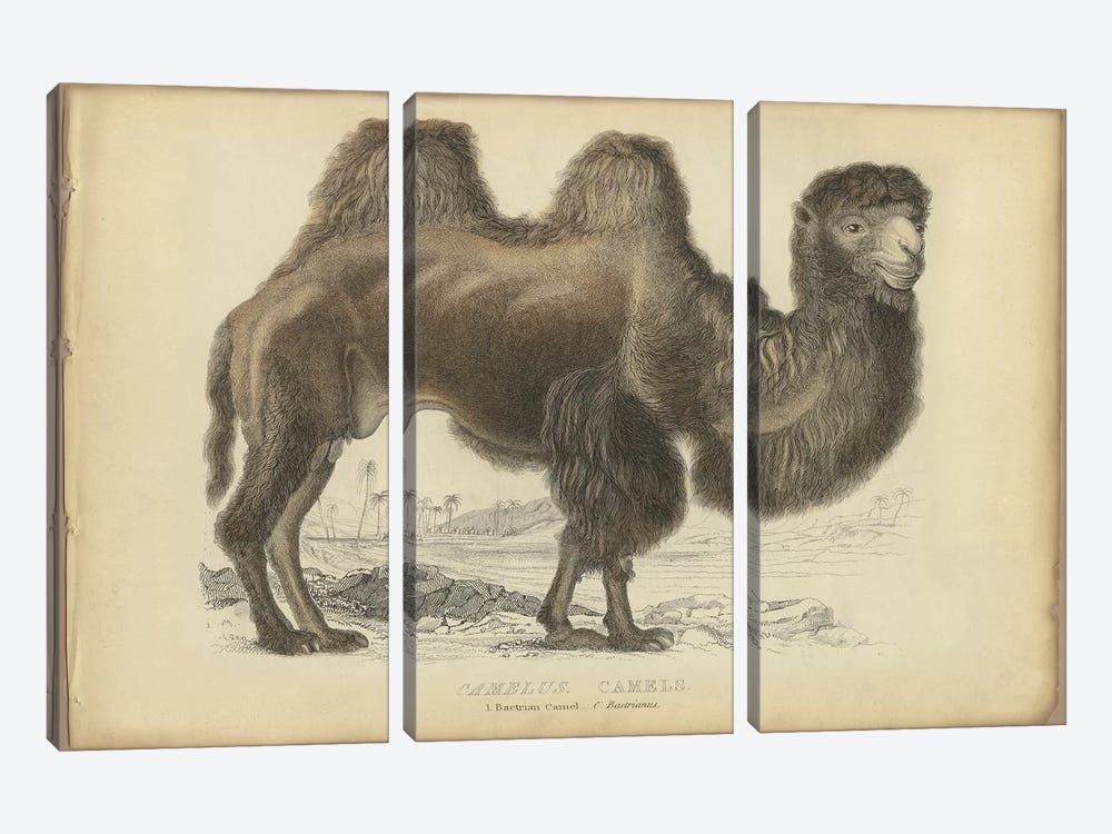 Camel Bactrian by PI Collection 3-piece Canvas Art