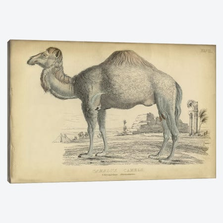 Camel Dromedary Canvas Print #PIC17} by PI Collection Canvas Art