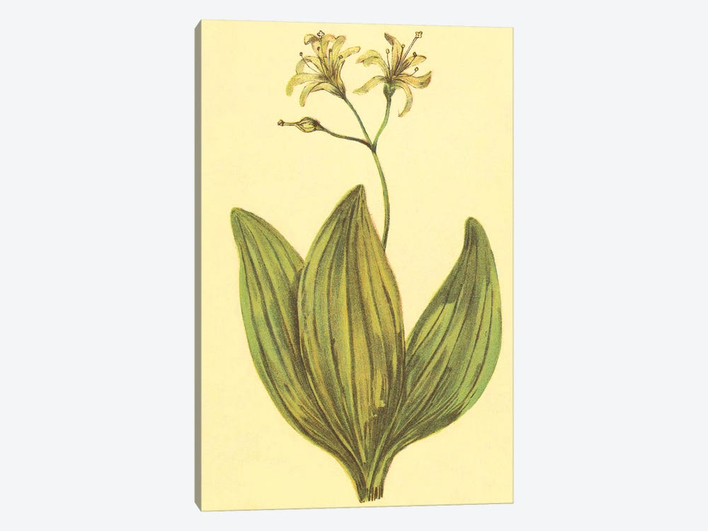 Clintonia by PI Collection 1-piece Art Print