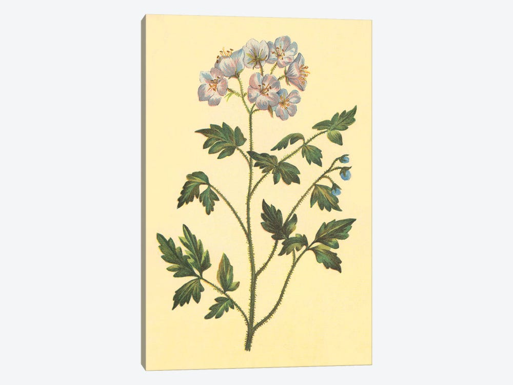 Cut Leaved Phacelia by PI Collection 1-piece Canvas Art
