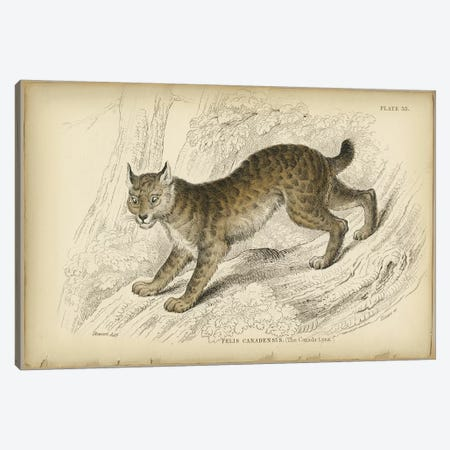 Felis Canadensis Lynx Canvas Print #PIC36} by PI Collection Canvas Artwork
