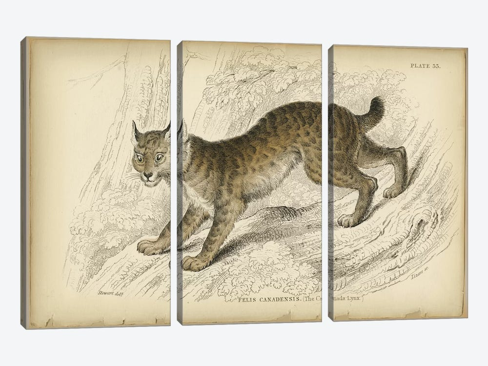 Felis Canadensis Lynx by PI Collection 3-piece Canvas Artwork