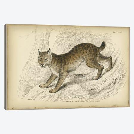 Felis Canadensis Lynx 3-Piece Canvas #PIC36} by PI Collection Canvas Artwork