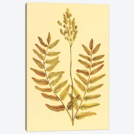 Flowering Fern Canvas Print #PIC39} by PI Collection Canvas Art Print
