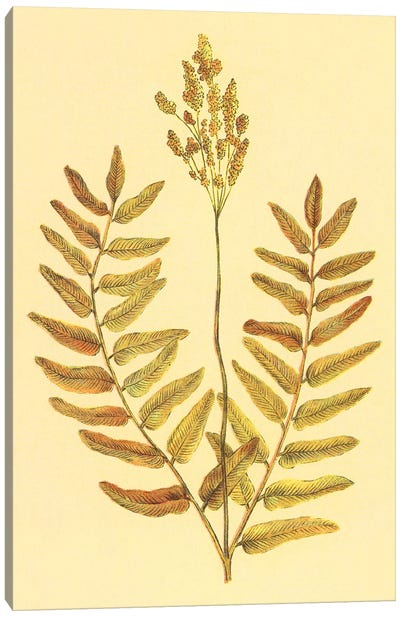 Flowering Fern Canvas Art Print