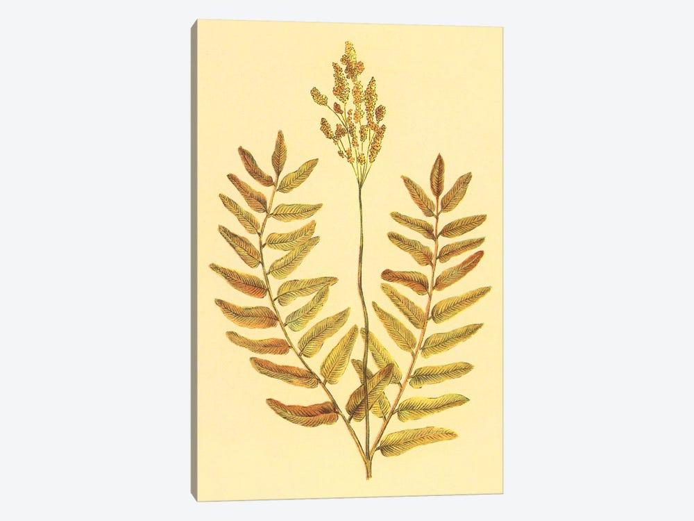Flowering Fern by PI Collection 1-piece Canvas Art Print