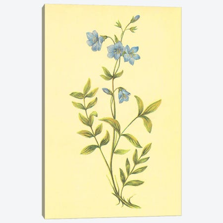 Greek Valerian Canvas Print #PIC45} by PI Collection Canvas Art Print