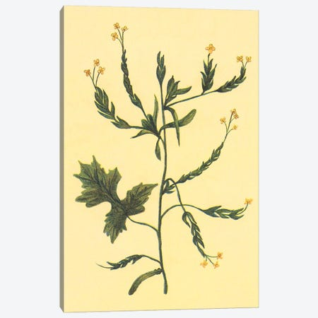 Hedge Mustard Canvas Print #PIC47} by PI Collection Canvas Art Print