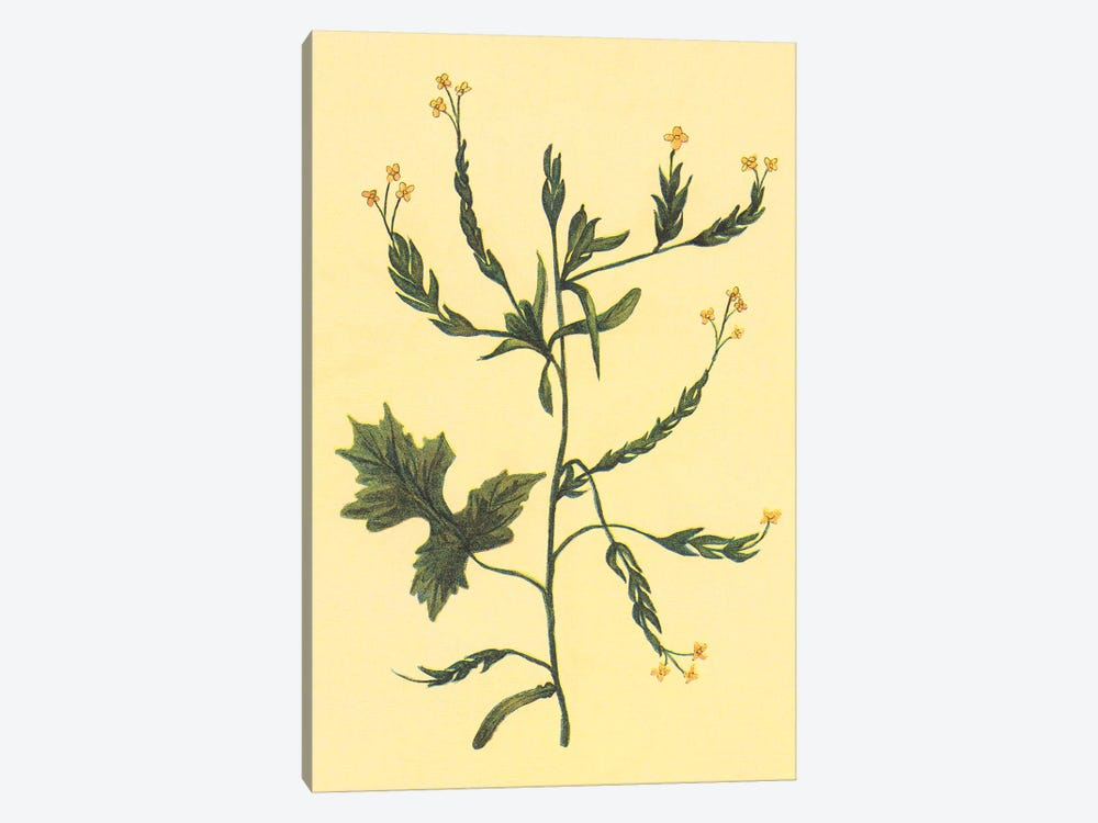 Hedge Mustard by PI Collection 1-piece Canvas Wall Art