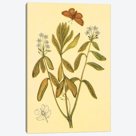 Labrador Tea Canvas Print #PIC54} by PI Collection Canvas Wall Art