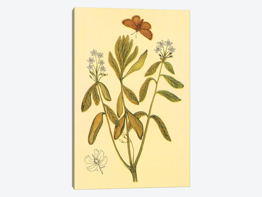 Labrador Tea by PI Collection 1-piece Canvas Wall Art