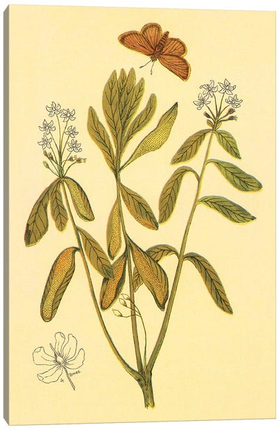 Labrador Tea Canvas Art Print
