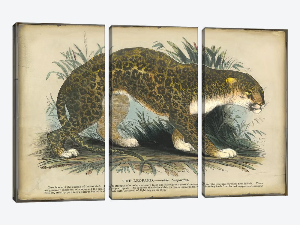 Leopard by PI Collection 3-piece Canvas Art Print