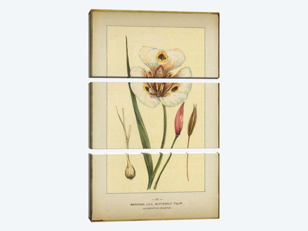 Mariposa Lily by PI Collection 3-piece Canvas Wall Art