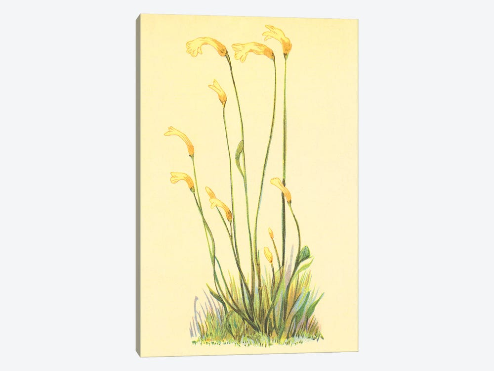 One Flowered Root by PI Collection 1-piece Canvas Art Print