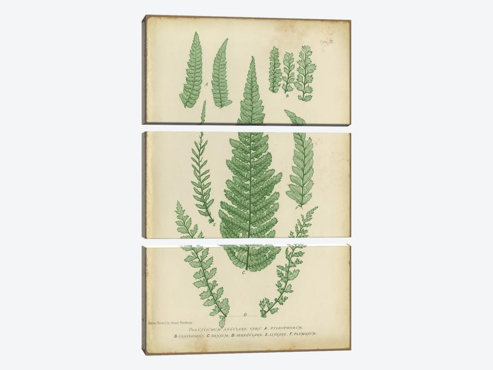 Polystichum Fern 3-piece Canvas Art Print