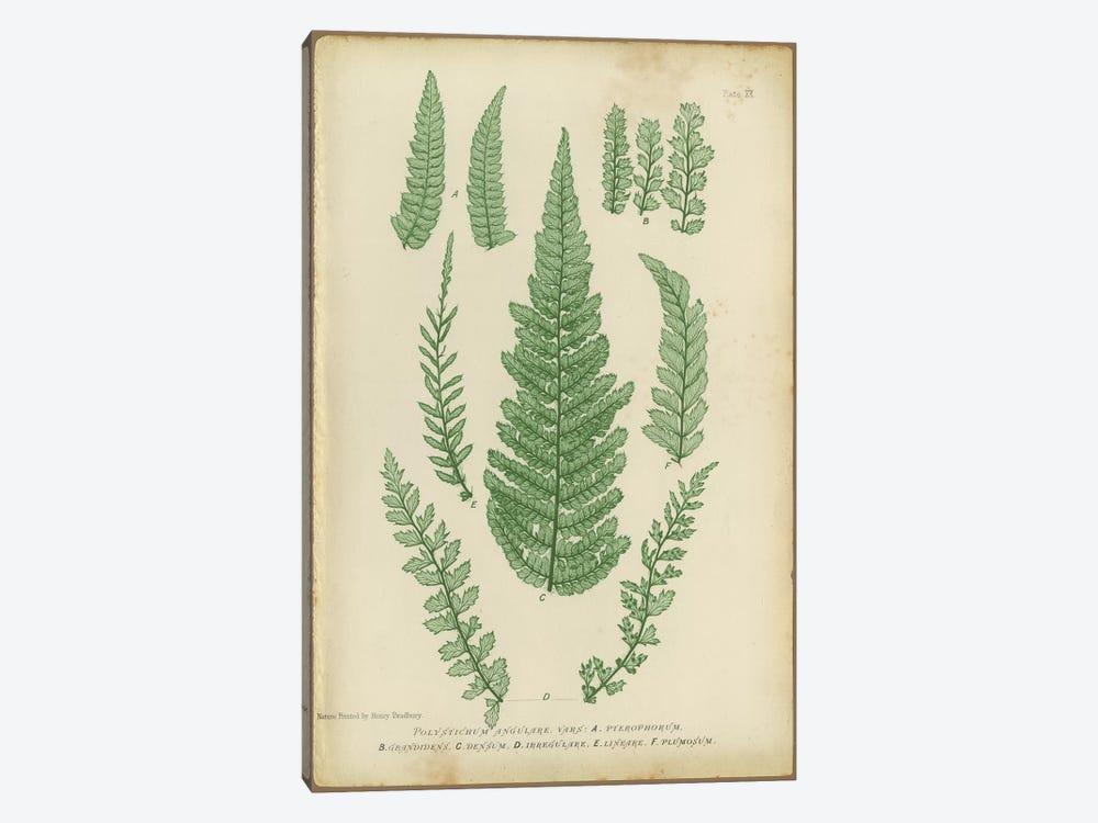 Polystichum Fern by PI Collection 1-piece Art Print