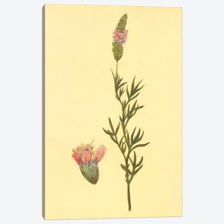 Prairie Clover Canvas Print #PIC74} by PI Collection Canvas Artwork