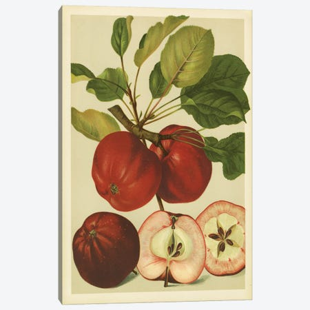 Red Veli Apples Canvas Print #PIC76} by PI Collection Canvas Wall Art