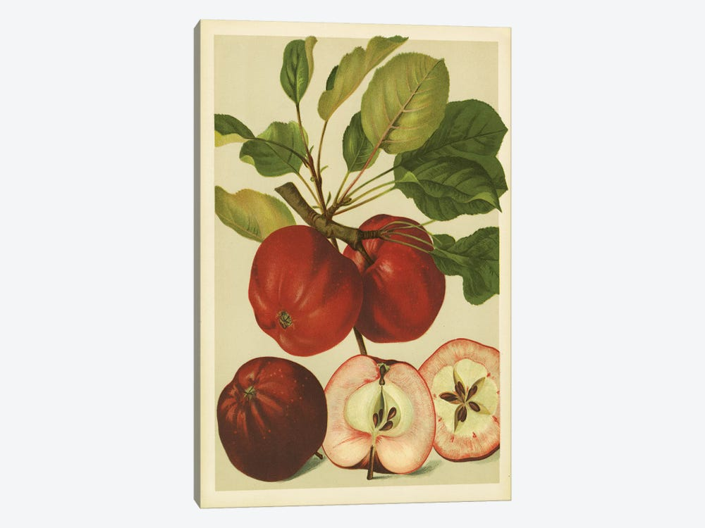 Red Veli Apples by PI Collection 1-piece Canvas Artwork