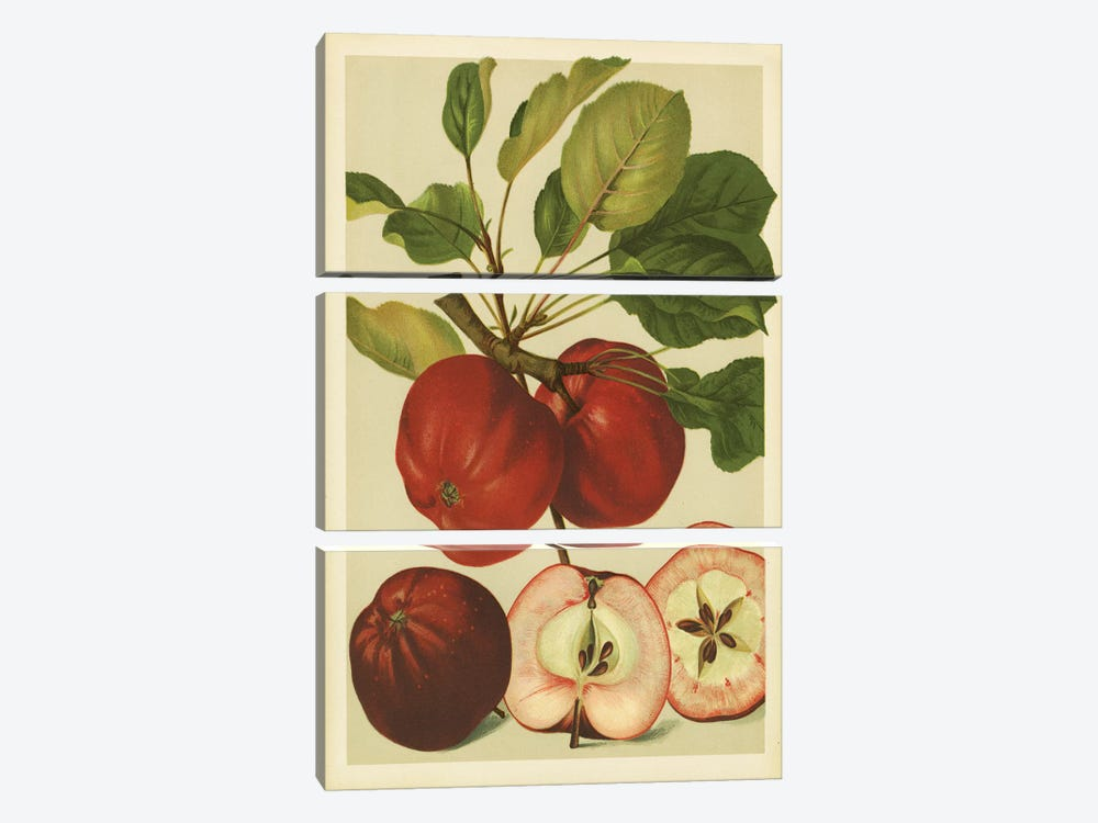 Red Veli Apples by PI Collection 3-piece Canvas Artwork