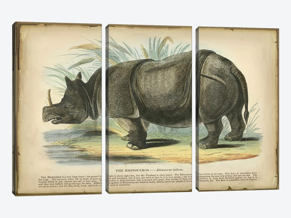 Rhino by PI Collection 3-piece Art Print