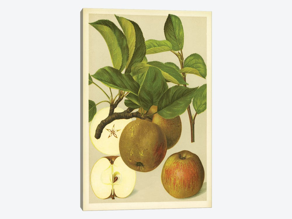Russet Apples by PI Collection 1-piece Art Print