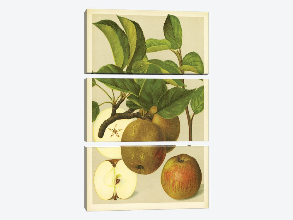 Russet Apples by PI Collection 3-piece Art Print