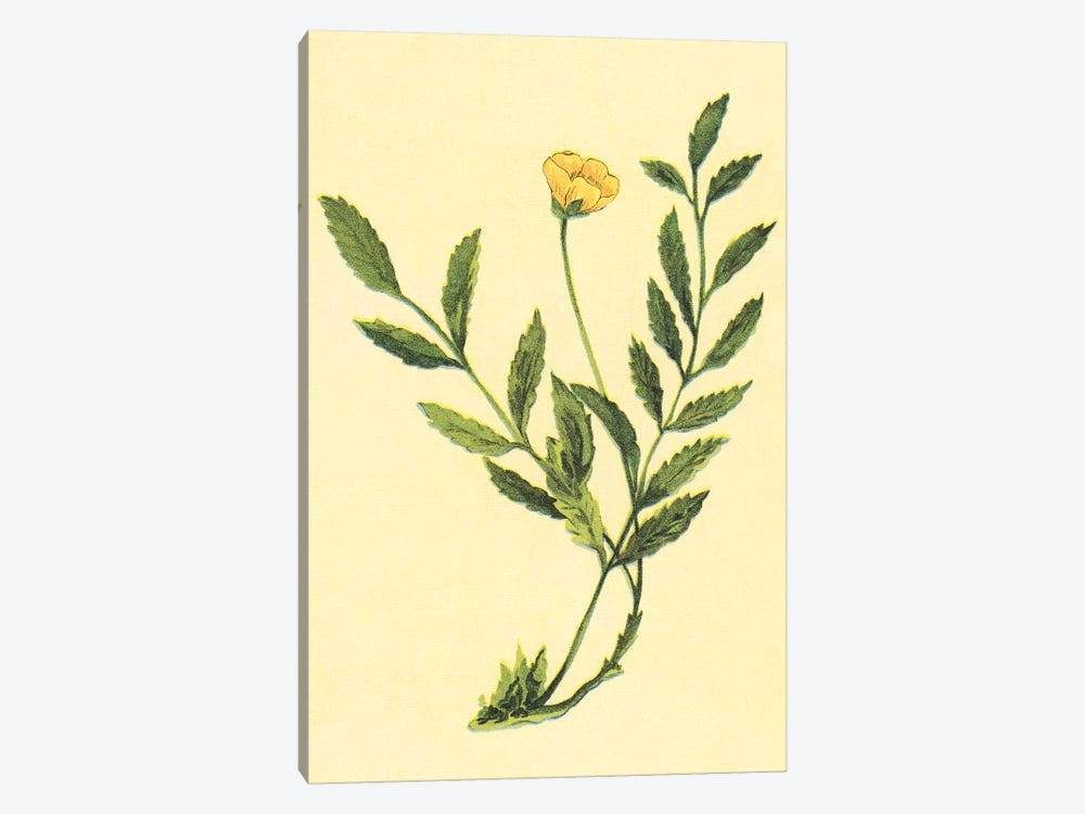 Silverweed Plant by PI Collection 1-piece Art Print