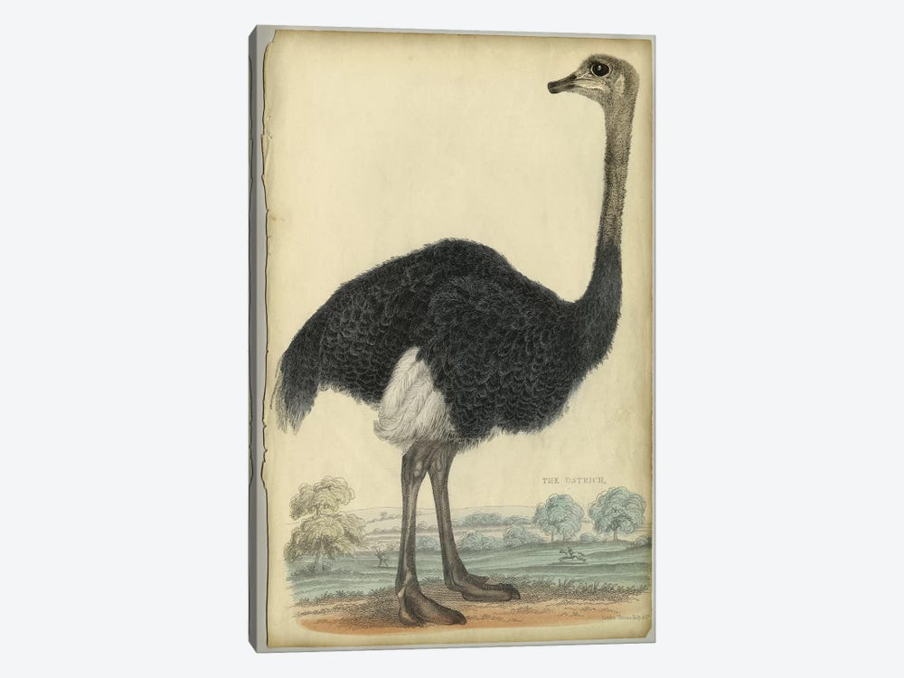 The Ostrich by PI Collection 1-piece Canvas Artwork