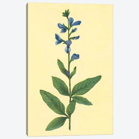 Tick Trefoil Flower Canvas Print #PIC96} by PI Collection Canvas Artwork