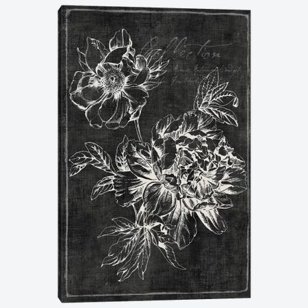 Black Botanical I Canvas Print #PIG17} by PI Galerie Canvas Art