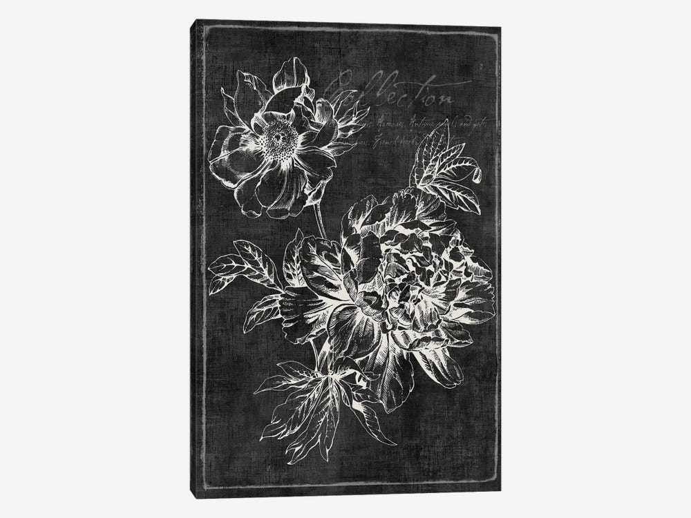 Black Botanical I by PI Galerie 1-piece Canvas Art