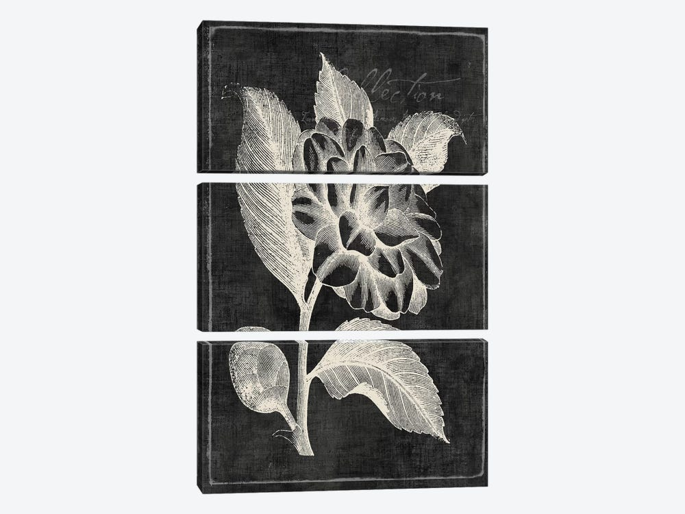 Black Botanical II by PI Galerie 3-piece Canvas Art Print