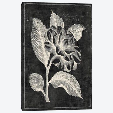 Black Botanical II Canvas Print #PIG18} by PI Galerie Canvas Art Print