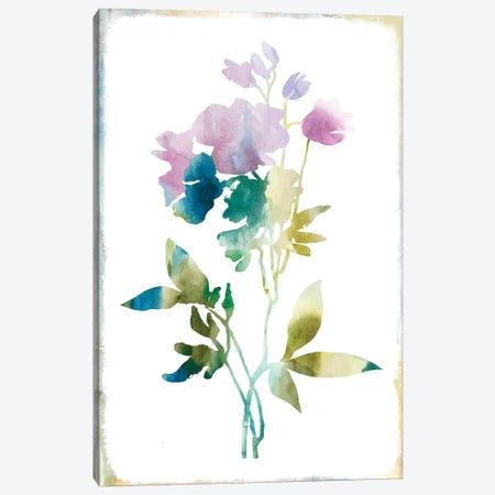 Summer Botanical II Canvas Print #PIG252} by PI Galerie Canvas Art Print