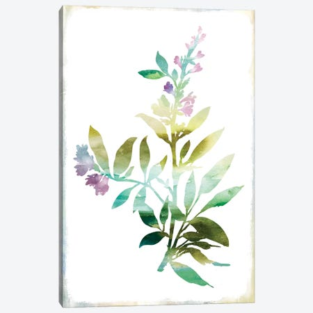 Summer Botanical III Canvas Print #PIG253} by PI Galerie Art Print