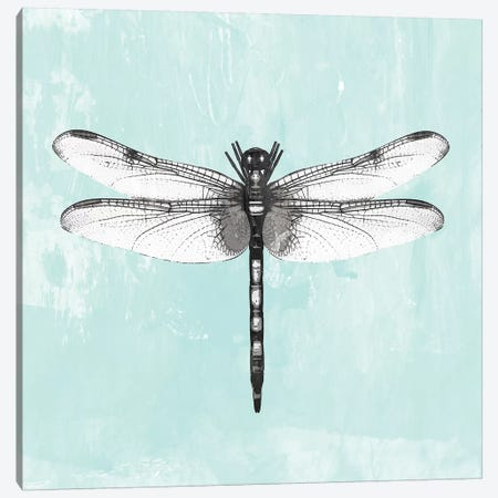 Dragonfly I Canvas Print #PIG56} by PI Galerie Canvas Art
