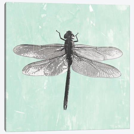 Dragonfly II Canvas Print #PIG57} by PI Galerie Canvas Wall Art