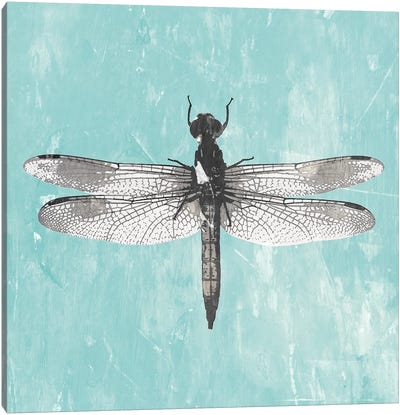 Dragonfly III Canvas Art Print