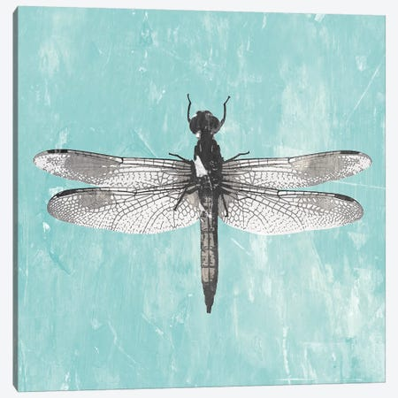 Dragonfly III Canvas Print #PIG58} by PI Galerie Art Print