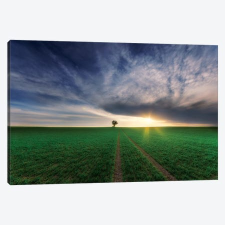 loner in the sun Canvas Print #PIK2} by Piotr Krol Canvas Art