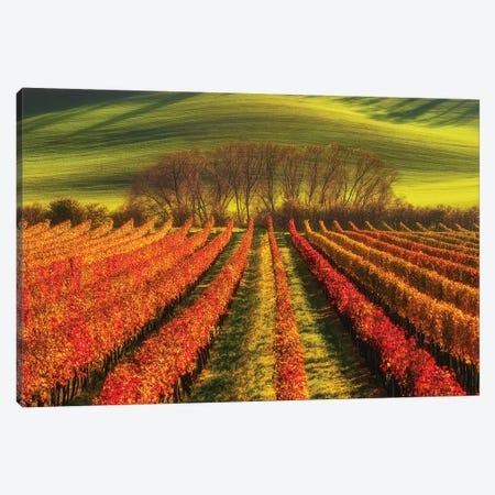Vine-Growing Canvas Print #PIK8} by Piotr Krol Canvas Art