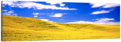 Canola Fields, Washington State, USA Canvas Art Print