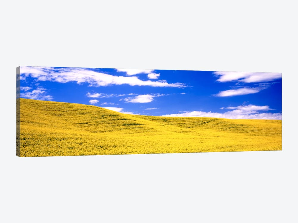 Canola Fields, Washington State, USA by Panoramic Images 1-piece Art Print