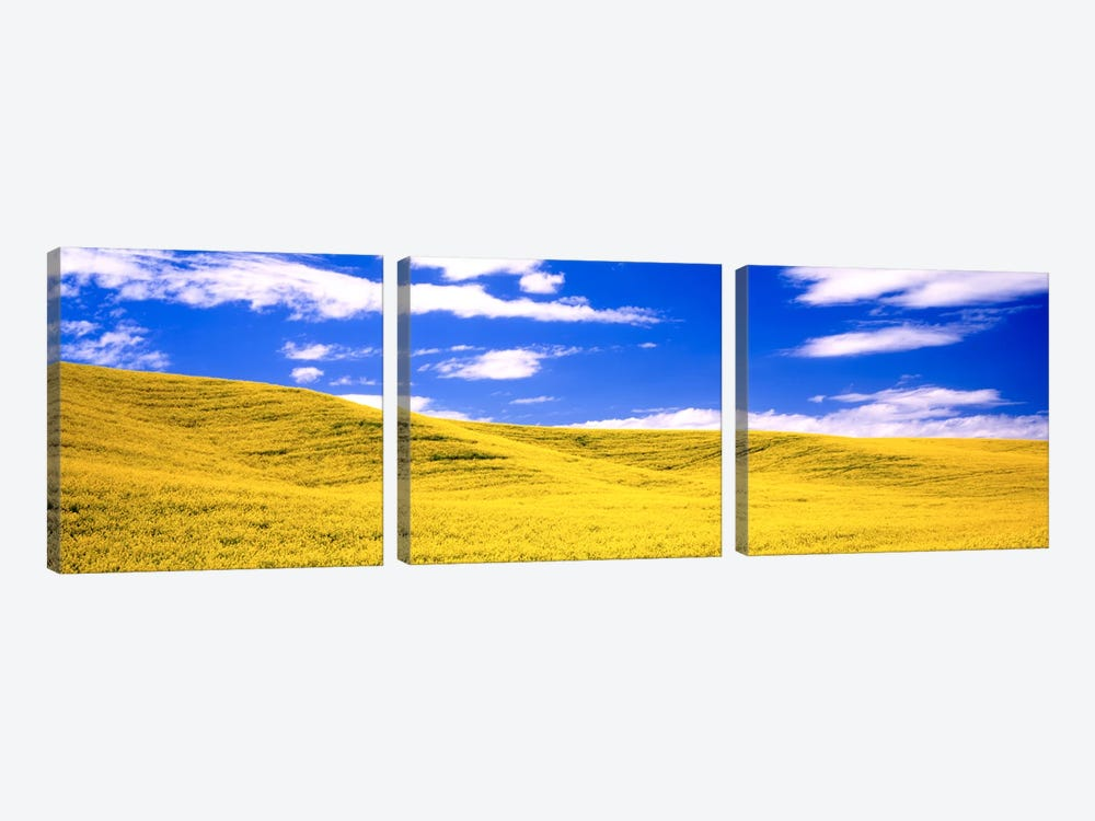 Canola Fields, Washington State, USA by Panoramic Images 3-piece Canvas Print