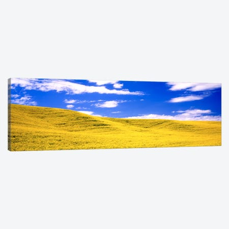 Canola Fields, Washington State, USA Canvas Print #PIM1001} by Panoramic Images Canvas Print